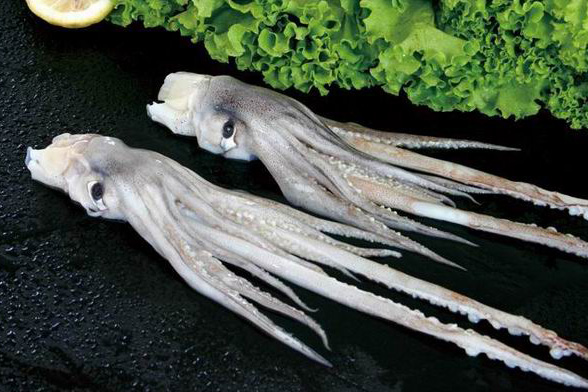 Frozen Fish Seafood Squid Tentacle